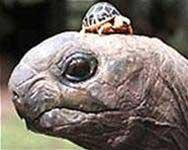 Tiếp nhận lại 34 cá thể rùa đặc biệt quý hiếm từ Hong Kong