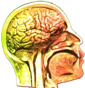 Cở sở sinh học của ý thức là gì?