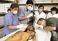 Xác ướp xăm hình lộ diện ở Peru