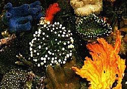 Khí hậu nóng dần làm tiêu hủy đá ngầm san hô