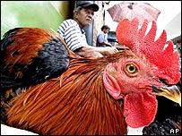 Thêm 5 người chết vì H5N1 ở Indonesia