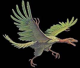 Tổ tiên của loài chim - Chim thủy tổ (Archaeopteryx)