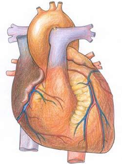 Bí quyết để tim được khoẻ mạnh