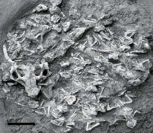 Dấu vết hoá thạch về sự chăm sóc con cái của khủng long