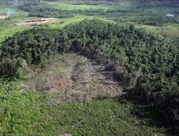 Gần 95% rừng nhiệt đới đang lâm nguy