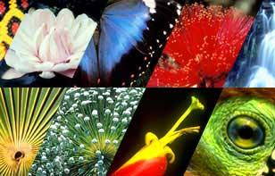 Thay đổi khí hậu có thể đẩy hơn một triệu loài tới nguy cơ diệt vong