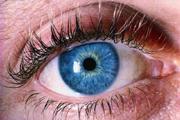 Tế bào gốc làm ngừng quá trình mù ở chuột