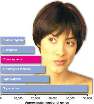 Biểu đồ tương đối số lượng gene ở người