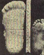 So sánh bàn chân của Bigfoot với bàn chân người bình thường