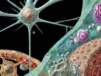 Anh: cảnh báo một loại bệnh não động vật có thể lây sang người
