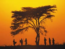 Trái đất nóng lên làm biến đổi gen động vật