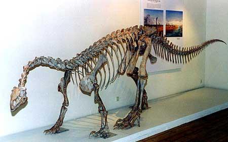 Loài khủng long cũng có máu nóng