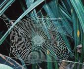 Mạng nhện cổ xưa nhất thế giới