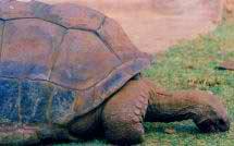 Con rùa già nhất thế giới qua đời