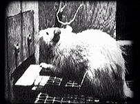Hai nhà khoa học Peter Milner và James Olds thí nghiệm làm cho chuột thấy hạnh phúc