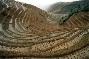 Văn hóa trồng trọt: Có cách đây 100.000 năm