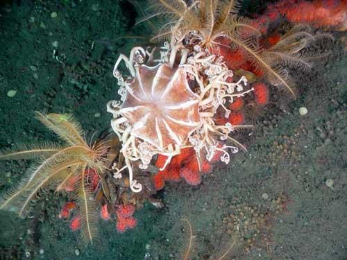 Một phát hiện gây kinh ngạc dưới đáy biển Thái Bình Dương
