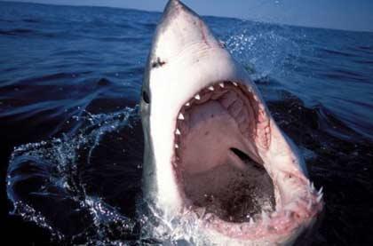 Sự thực và hư cấu về cá mập