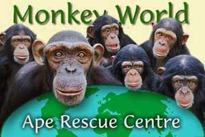 Xây dựng trung tâm cứu hộ khỉ tại vườn quốc gia Cát Tiên