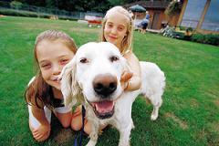 Lông thú (chó, mèo...) là một trong những nguyên nhân gây dị ứng
