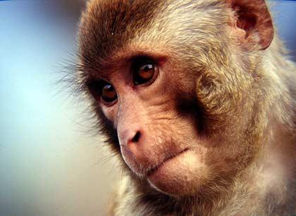 Loài khỉ cũng có khả năng quan sát