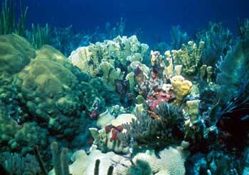 Những cảnh báo nghiêm trọng về cuộc sống Đại dương