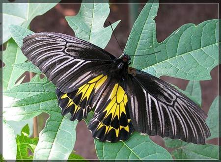 Phát hiện nhiều loài bướm đặc hữu