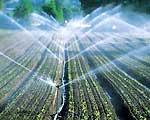 Phương pháp tưới nước tiết kiệm cho cây bông