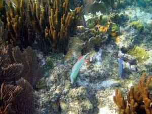 Rạn san hô ở Việt Nam – Đang hồi nguy cấp