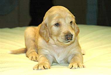 """Chú chó Snuppy có thêm hai bạn gái mới """"Bona"""" và """"Peace"""""""