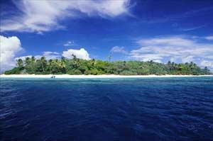 LHQ: rừng ngập mặn tại Thái Bình Dương có nguy cơ bị xóa sổ