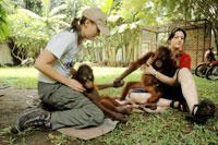 Bàn giao 2 con đười ươi quý hiếm về Indonesia