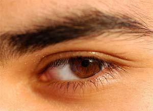 Mi mắt cũng có chấy rận