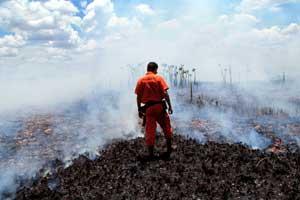 Rừng Amazon có nguy cơ biến thành sa mạc
