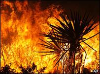 Phát hiện đuợc lịch sử của các đám cháy nhờ vào than.