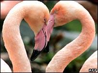 Bí quyết hấp dẫn bạn tình của động vật