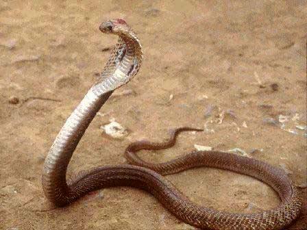 Top 10 động vật nguy hiểm chết người