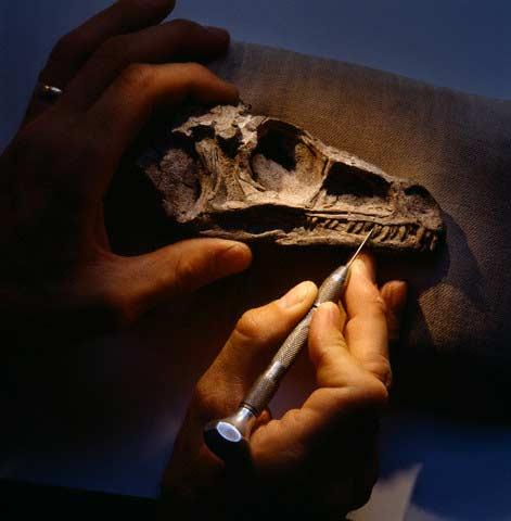 Khai quật và gìn giữ những bộ xương khủng long hóa thạch