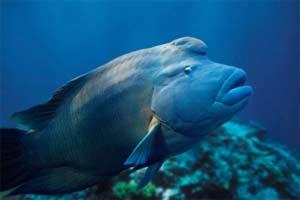 Bảo vệ các loài thủy hải sản có nguy cơ tận diệt
