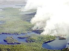 """Biến đổi khí hậu - """"thủ phạm"""" gây cháy rừng và nắng nóng bất thường"""