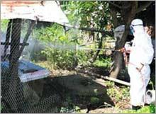 Thủ tướng Nguyễn Tấn Dũng: Kiên quyết không để dịch cúm gia cầm bùng phát