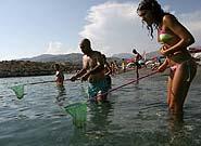Địa Trung Hải báo động sứa