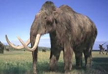Hungary: Phát hiện hóa thạch voi mammoth