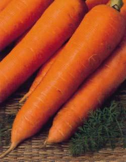 Phương pháp trồng cà rốt Nhật