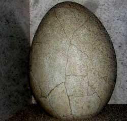 Phát hiện trứng đà điểu 5000 năm tuổi