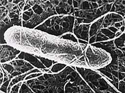 Phát hiện độc tố mới của vi khuẩn trong ống tiêu hoá