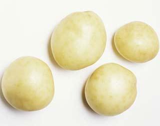 Anh sẽ sản xuất khoai tây biến đổi gen cho năm 2015?