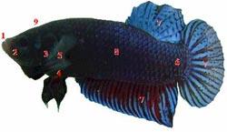Biết về cá của mình (phần 2)