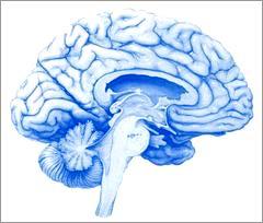 Phát hiện phân tử của trí nhớ