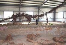 TQ phát hiện hóa thạch loài khủng long mới